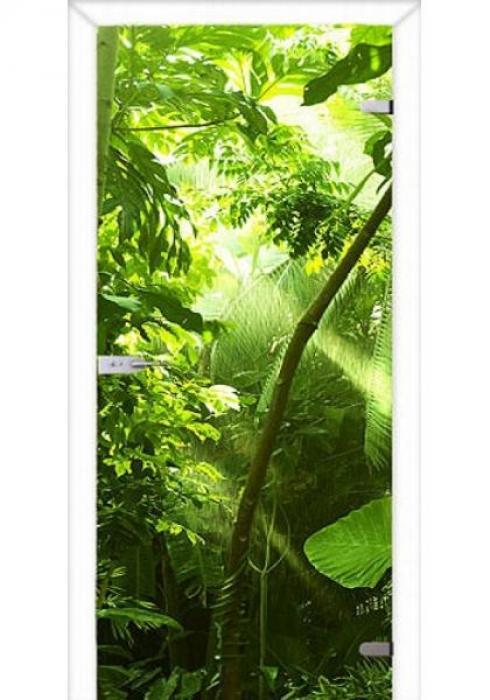 Асток, Межкомнатная стеклянная дверь с фотопечатью СДФ 032